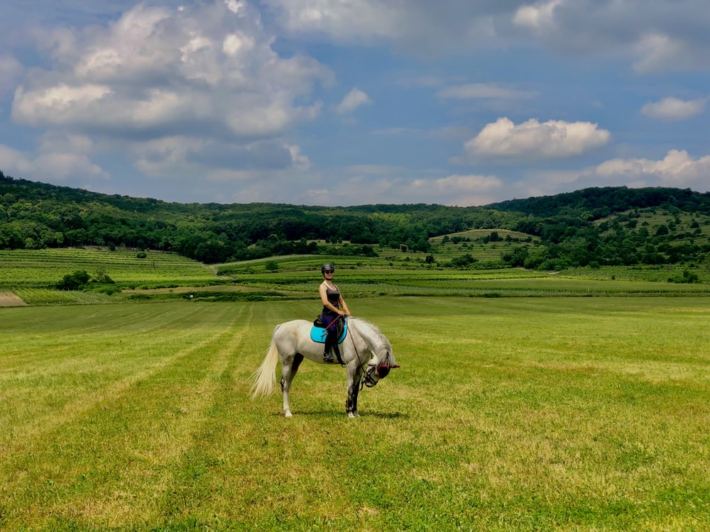 woman riding white horse on grassland during daytime