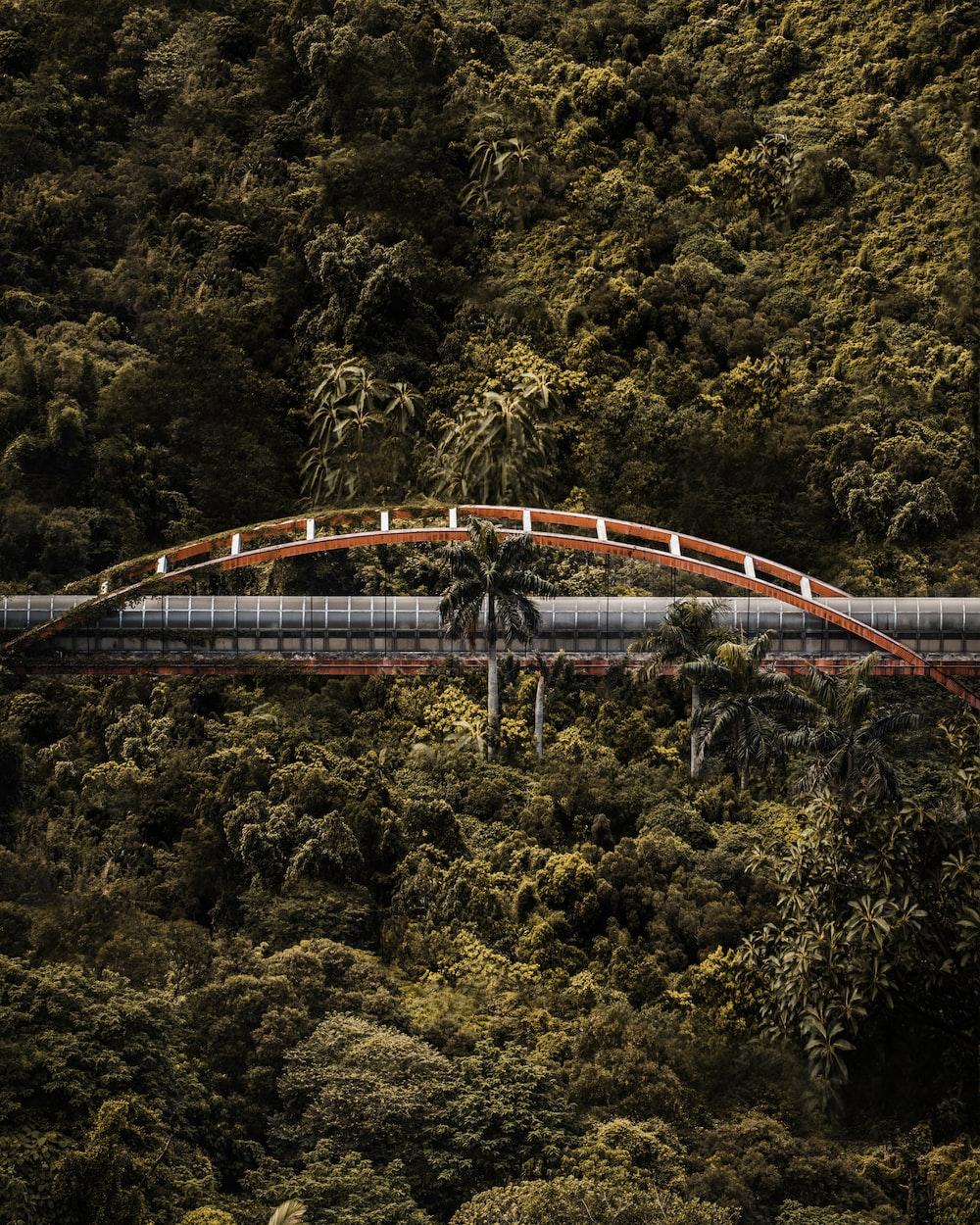 orange and gray bridge over trees