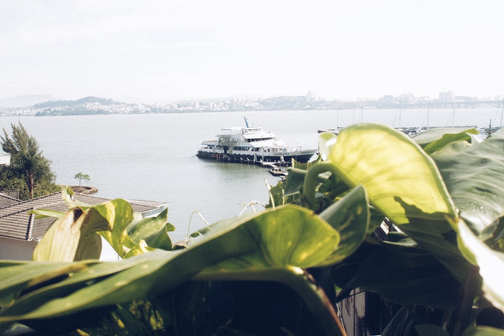 green-leafed plant near body of water and boat