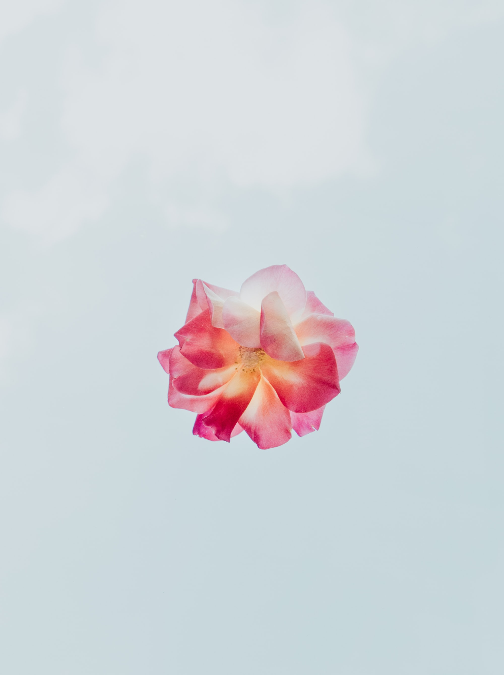 Taken at daytime, the flower was placed on a piece of glass above me so I could get the clouds in the background.