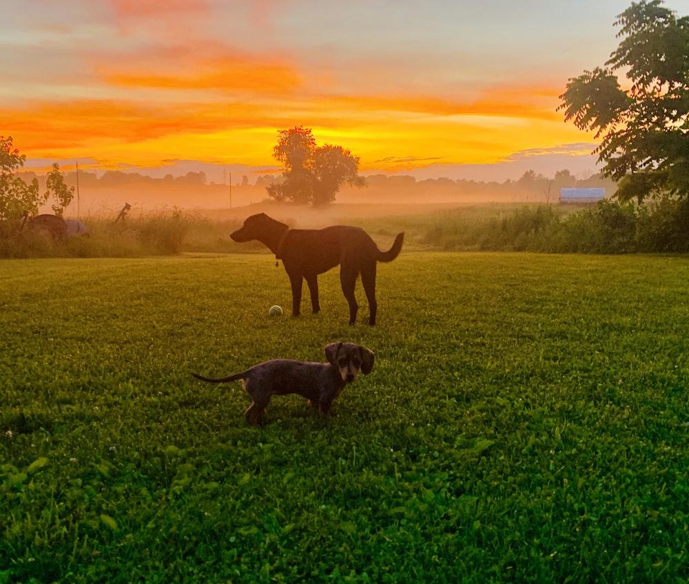 black dog on grass field