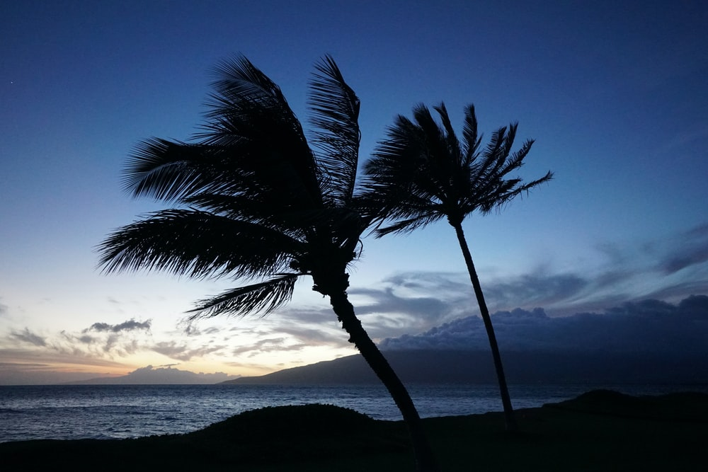 two coconut palm trees viewing sea at night time