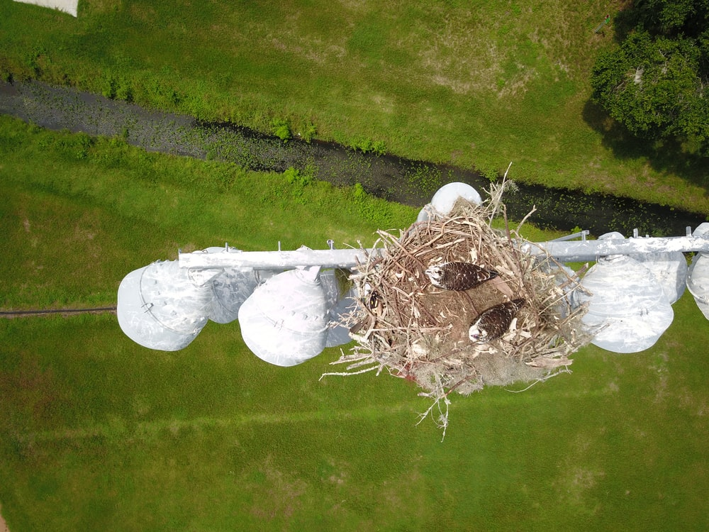 top view of a brown bird's nest