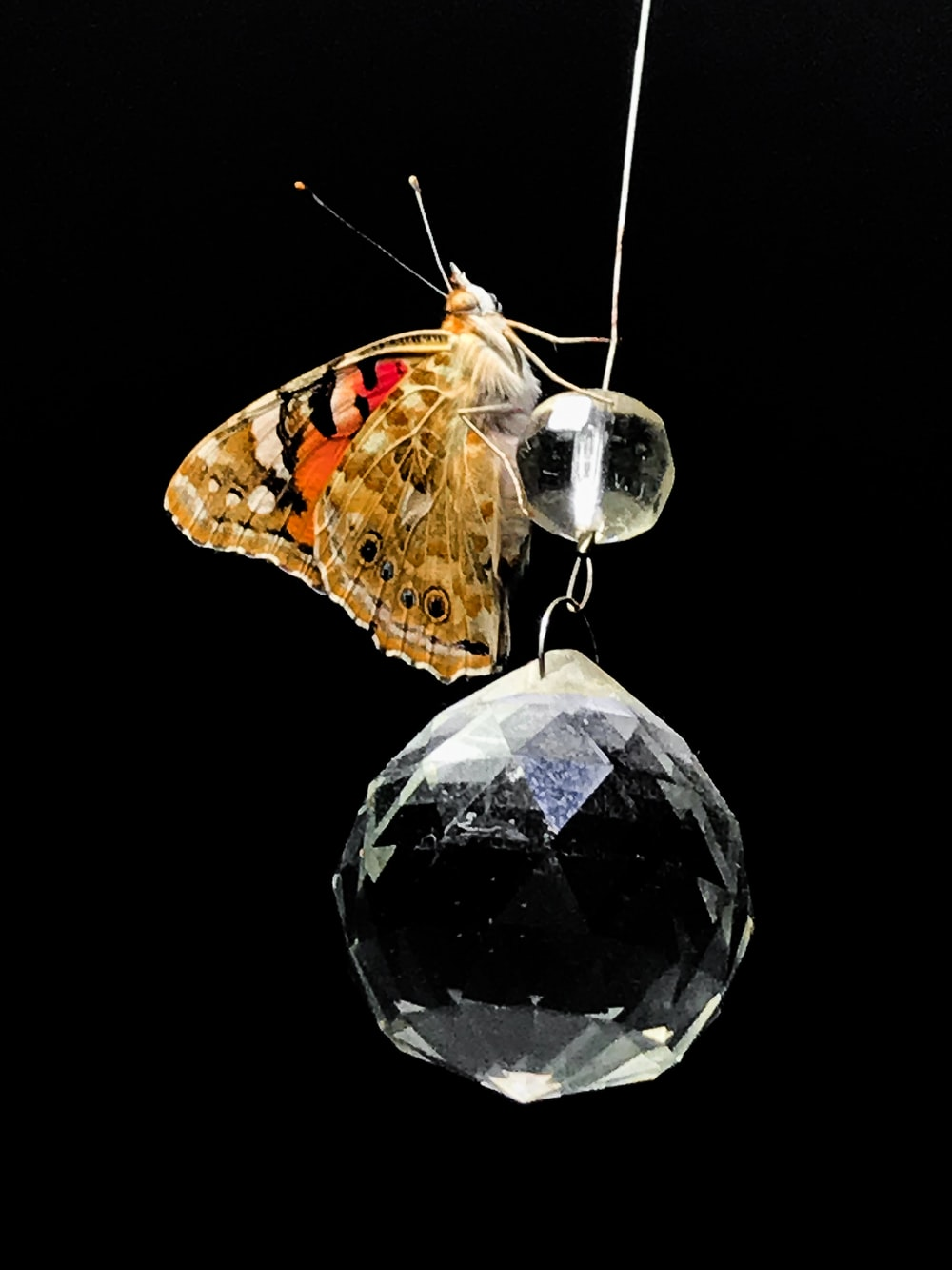 brown and red moth on hanged clear bead