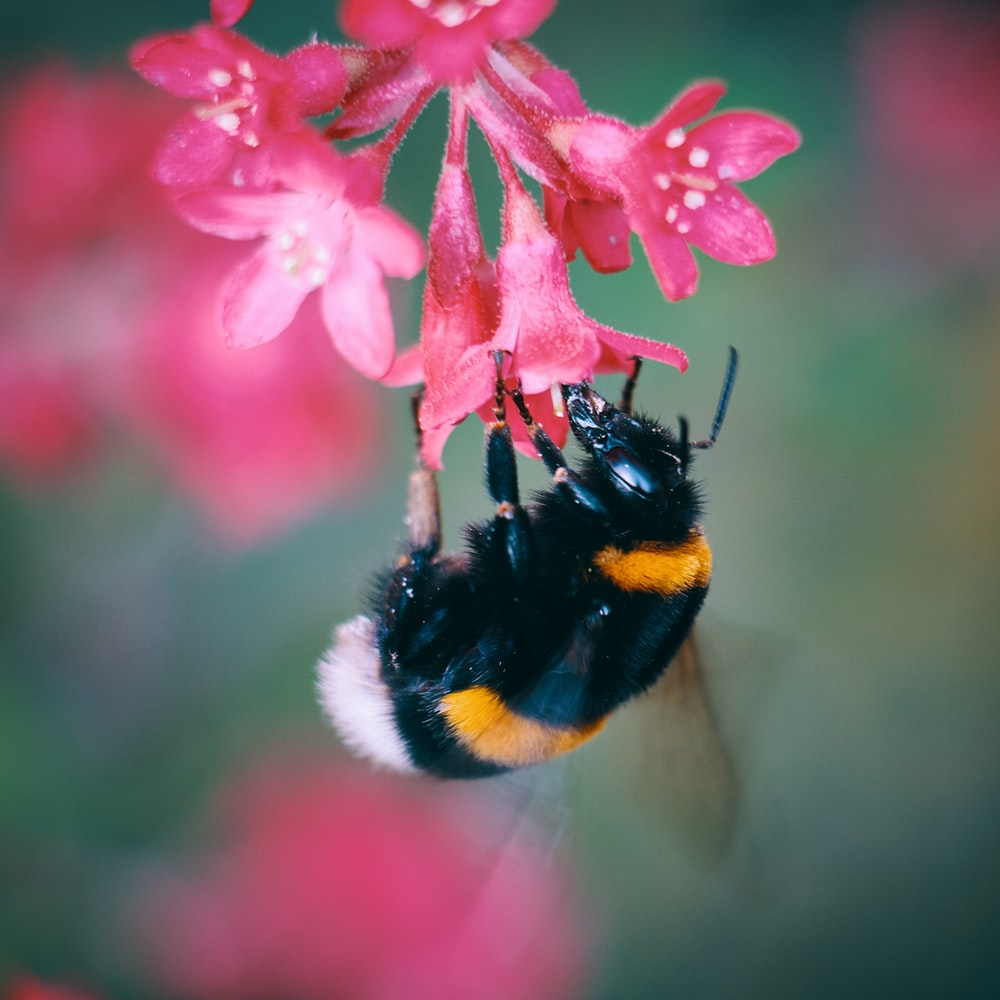 macro photo of bee sipping flower's nectar