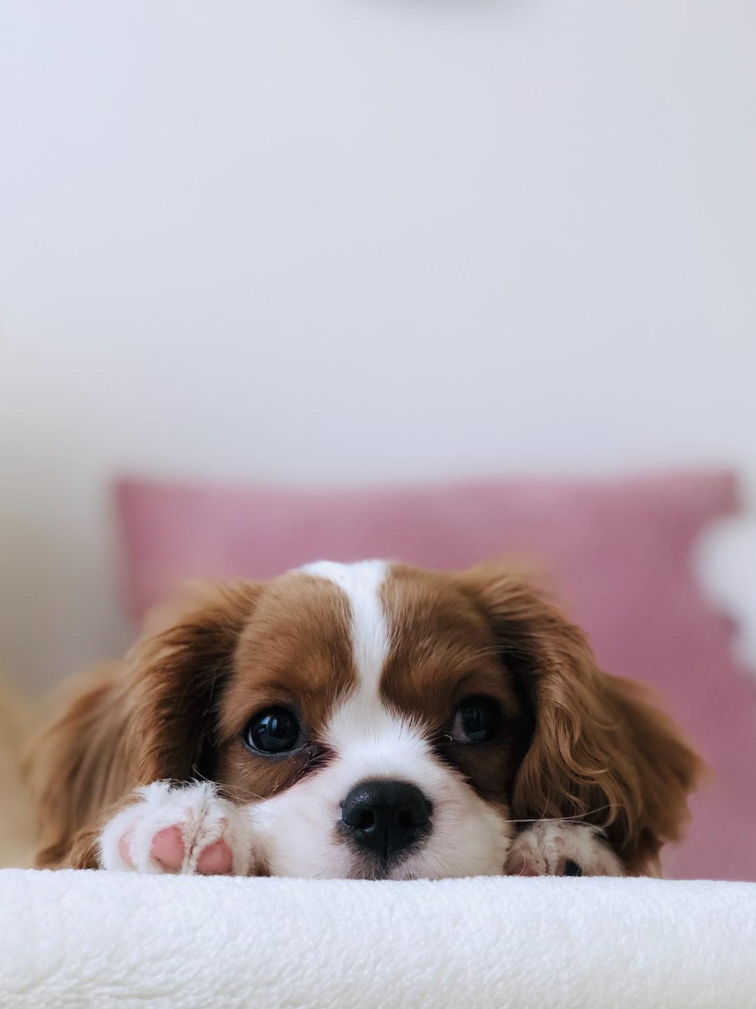 Pinterest Holiday Desktop Wallpapers On Wallpaperdog Puppy Wallpapers Free Hd Download 500 Hq Unsplash