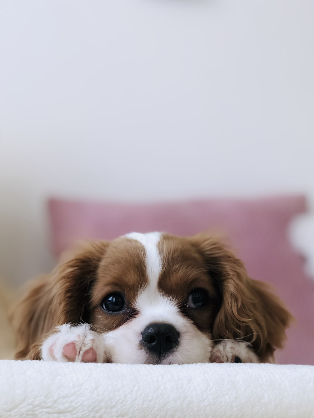 Puppy Wallpapers: Free HD Download [500+ HQ]
