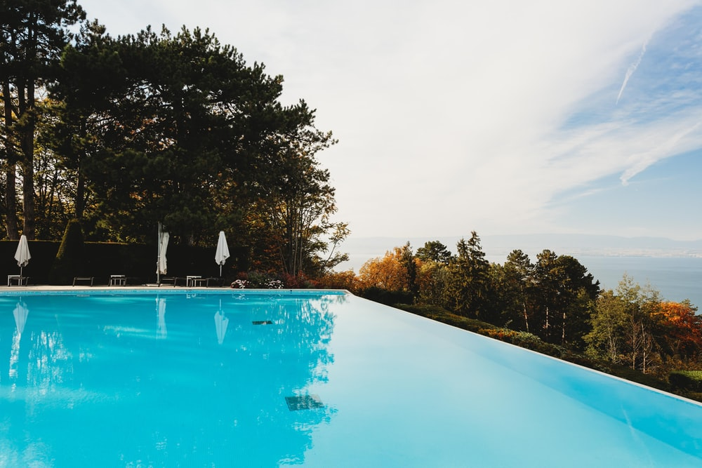 swimming pool near tree