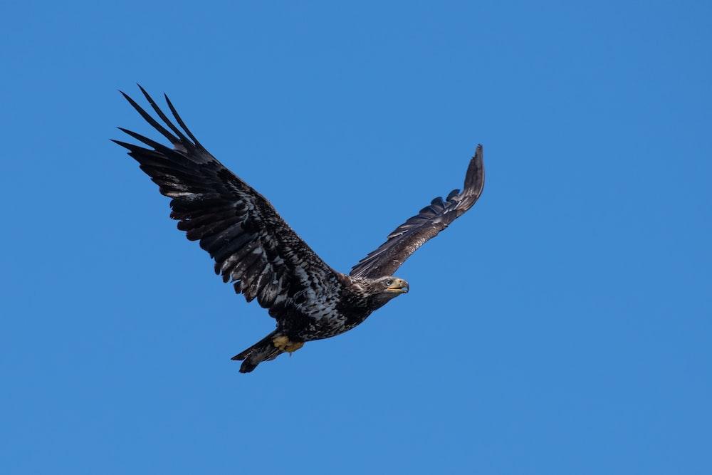 black hawk flying during daytime