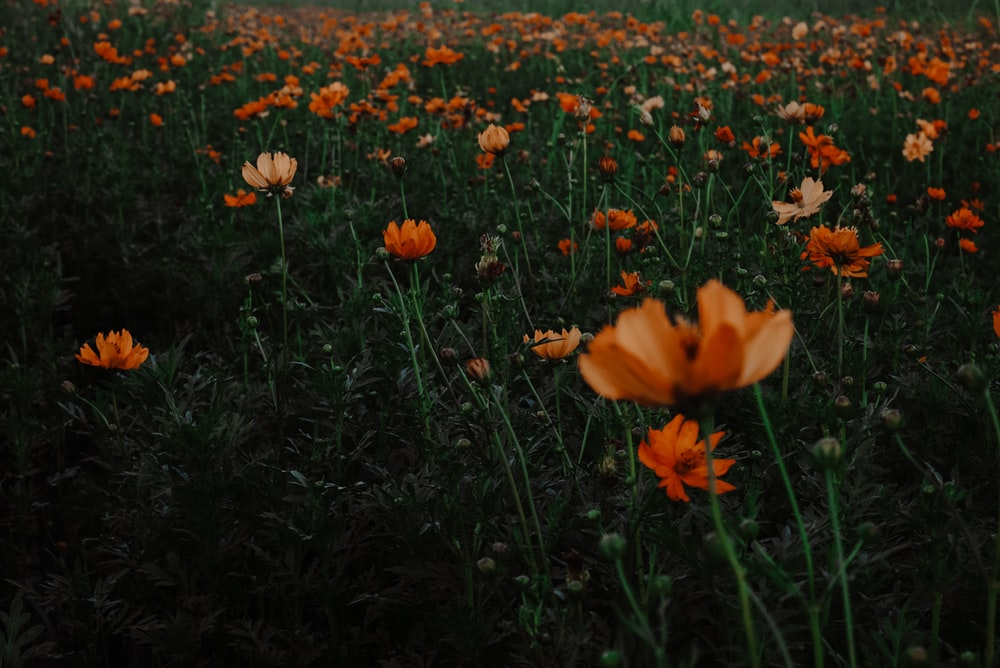 shallow focus photo of orange flowers