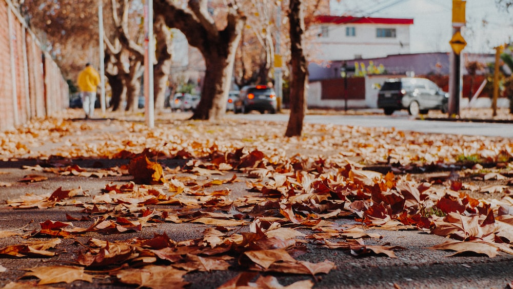 brown leaves on pavement near trees