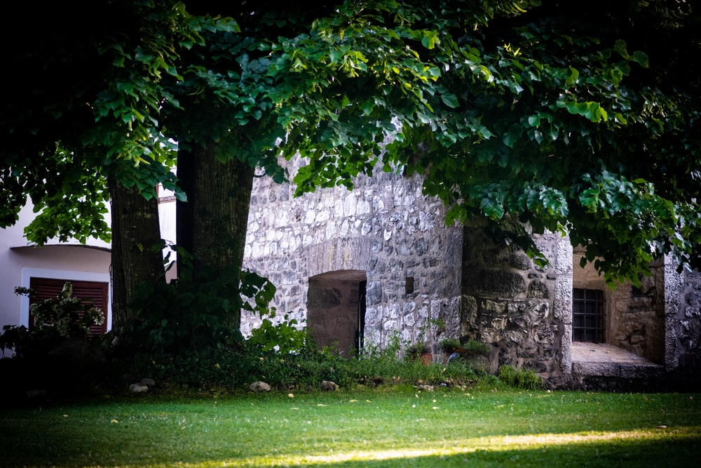green field under a treed near a concrete building durign daytime close-up photography