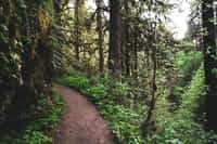 This            Trail          of         Mine trails stories