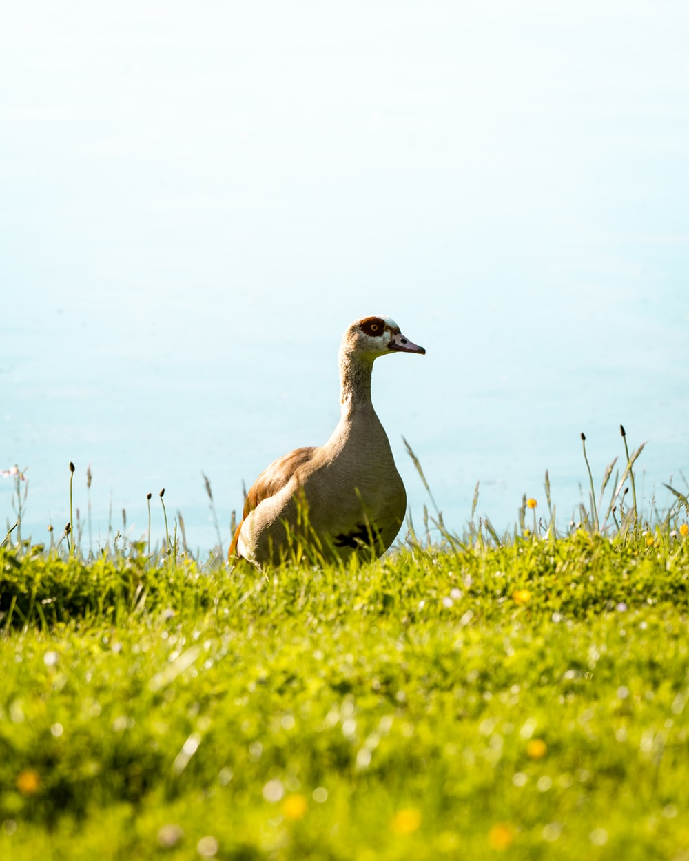 shallow focus photo of brown duck