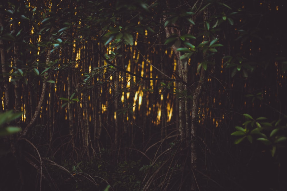 100 Firefly Pictures Download Free Images On Unsplash