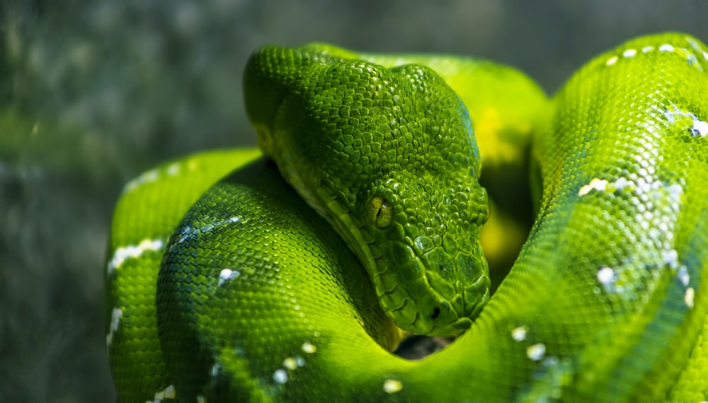 shallow focus photo of green snake