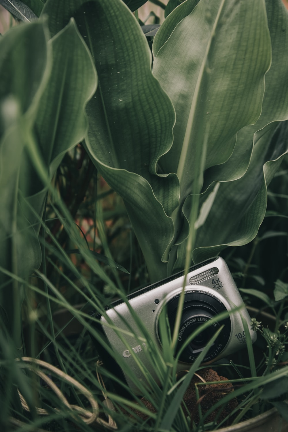 silver point-and-shoot camera on grass beside leaves