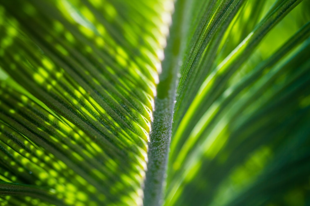 closeup photography of green palm leaf