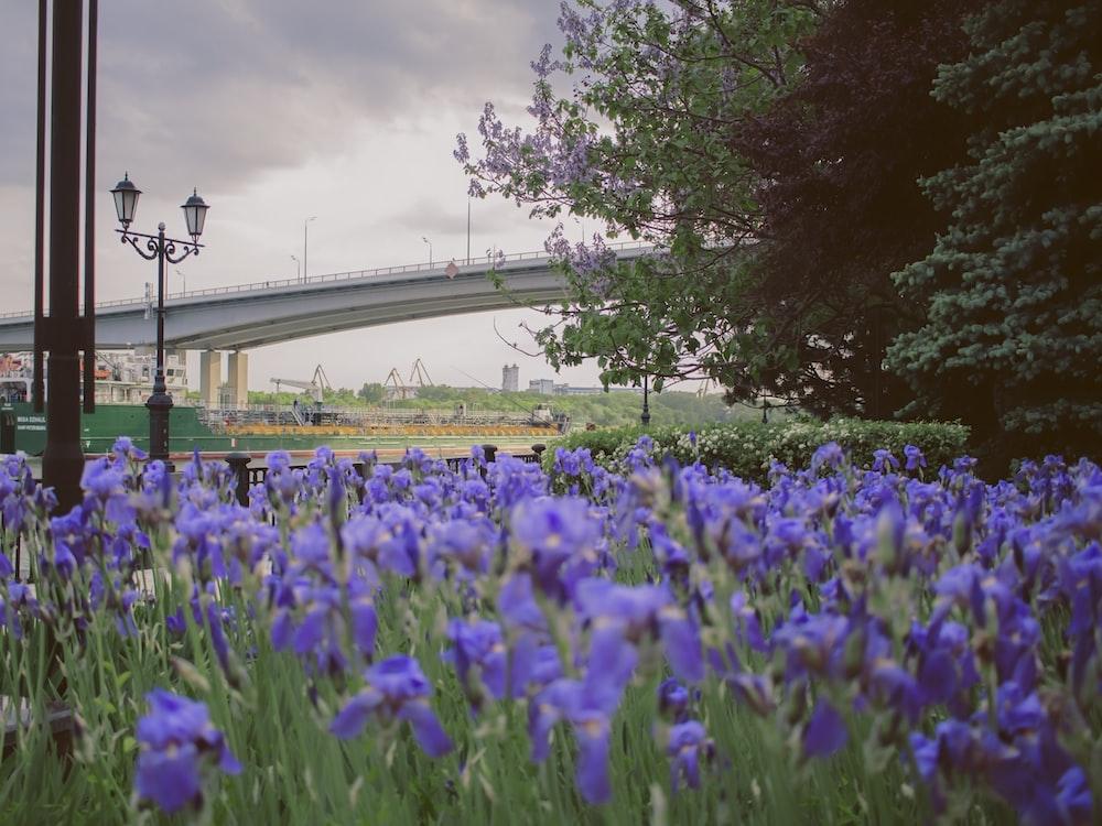 purple-petaled flowers near lamppost and tree