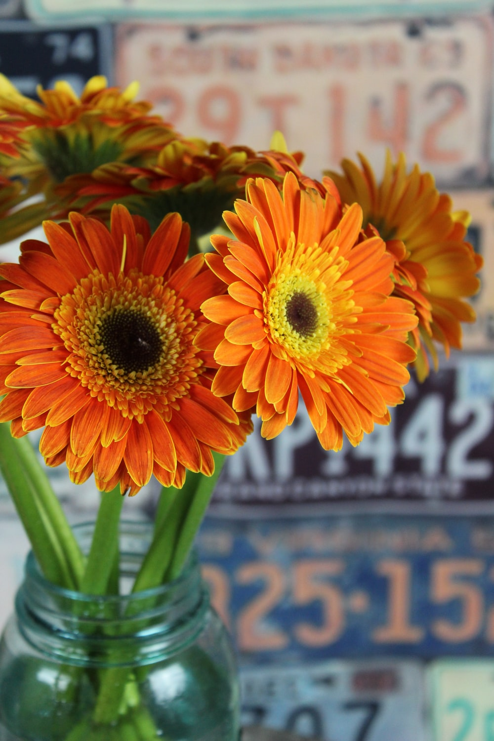 multicolored daisy flowers in clear glass vase