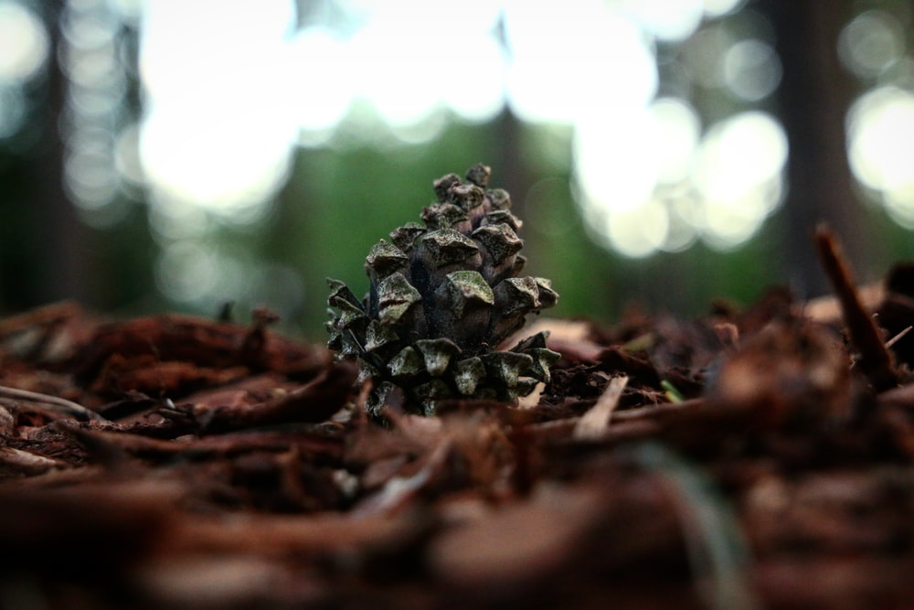 selective focus photography of gray pinecone