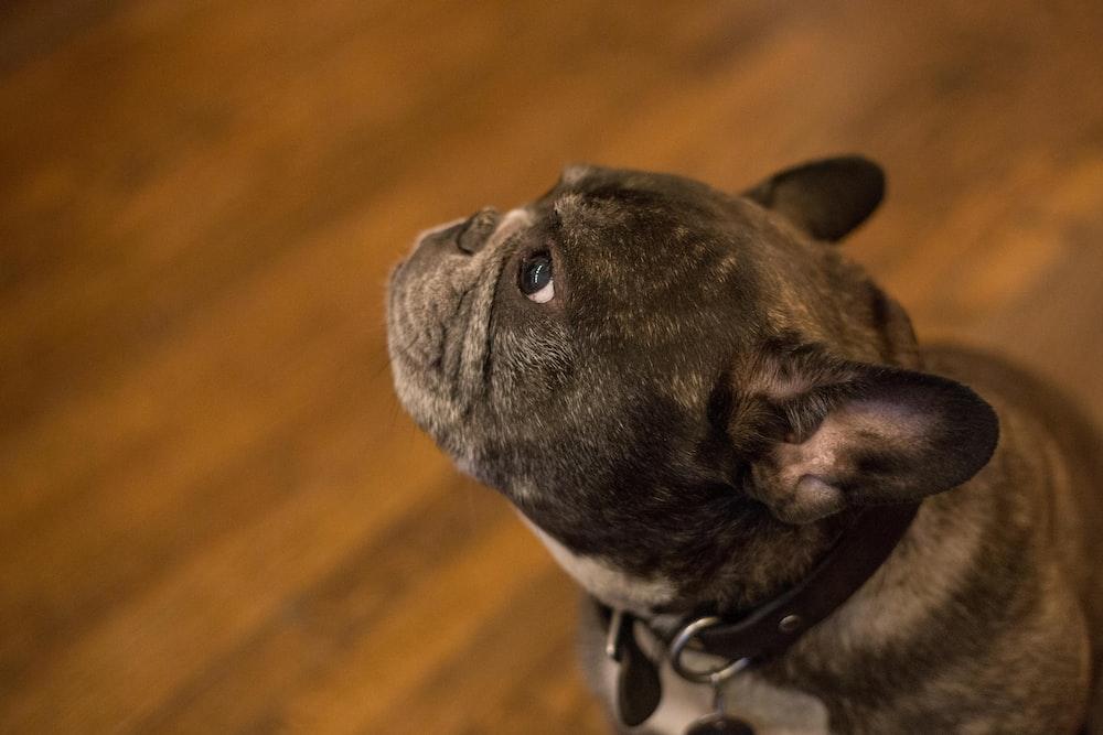 dog looks up