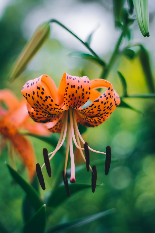 selective focus photography of orange-white petaled flower