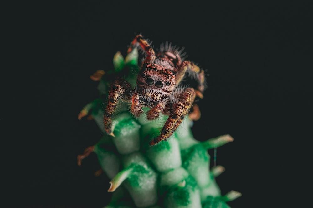 brown hairy tarantula on green stalk