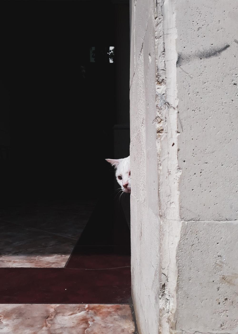white cat beside wall