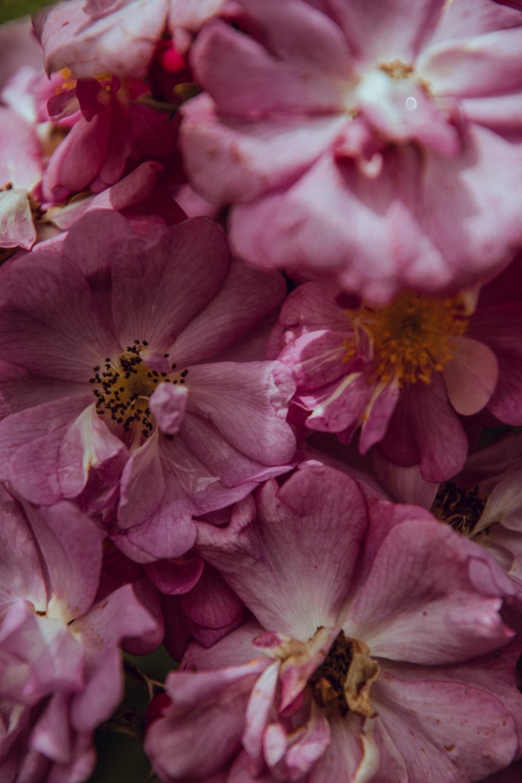 pinkk petaled flower lot