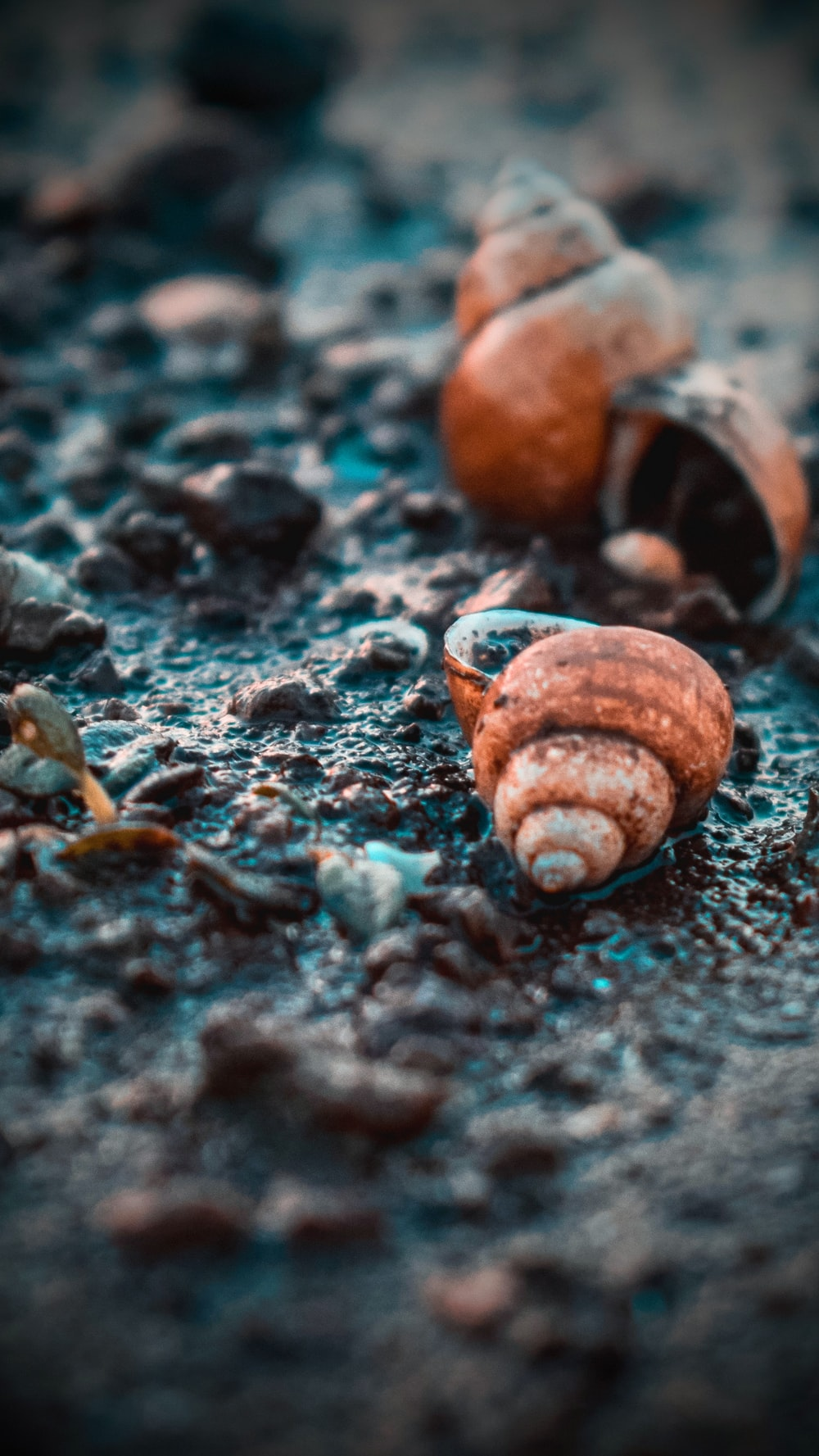 two snails on soil ground