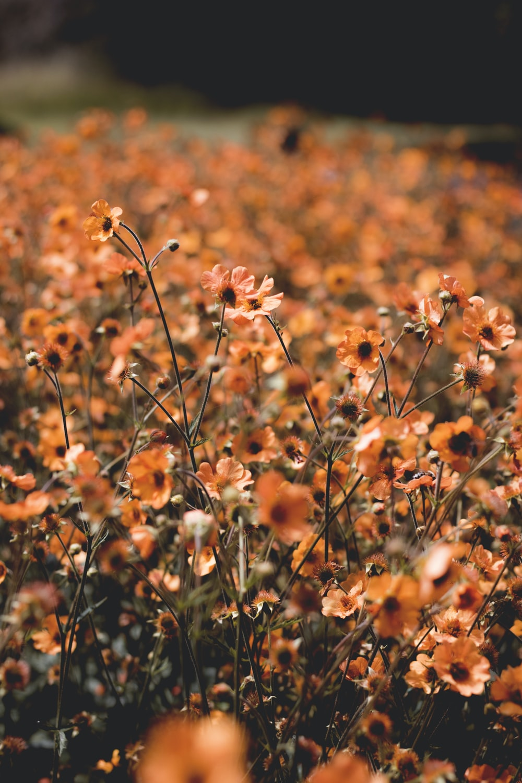 orange petaled flower bloom selective focus photography