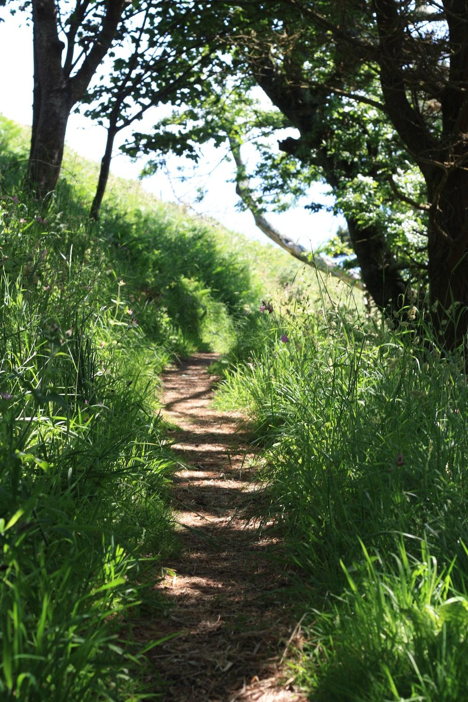 walkway between green grass at daytime
