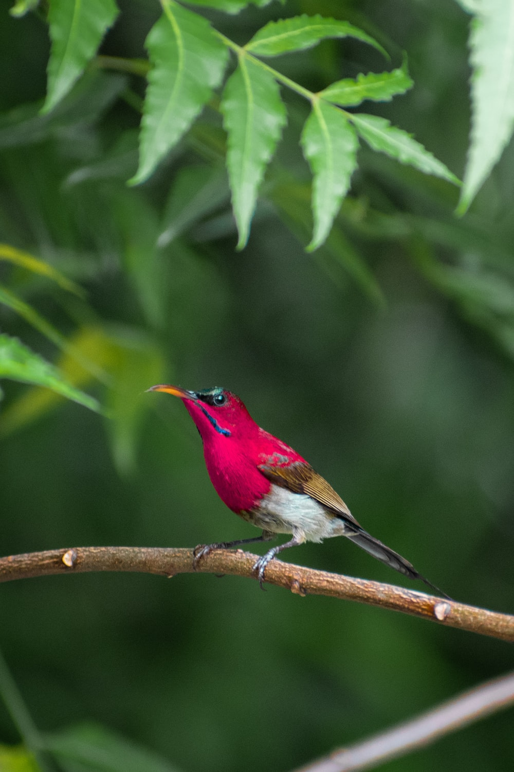 shallow focus photo of red bird on tree branch