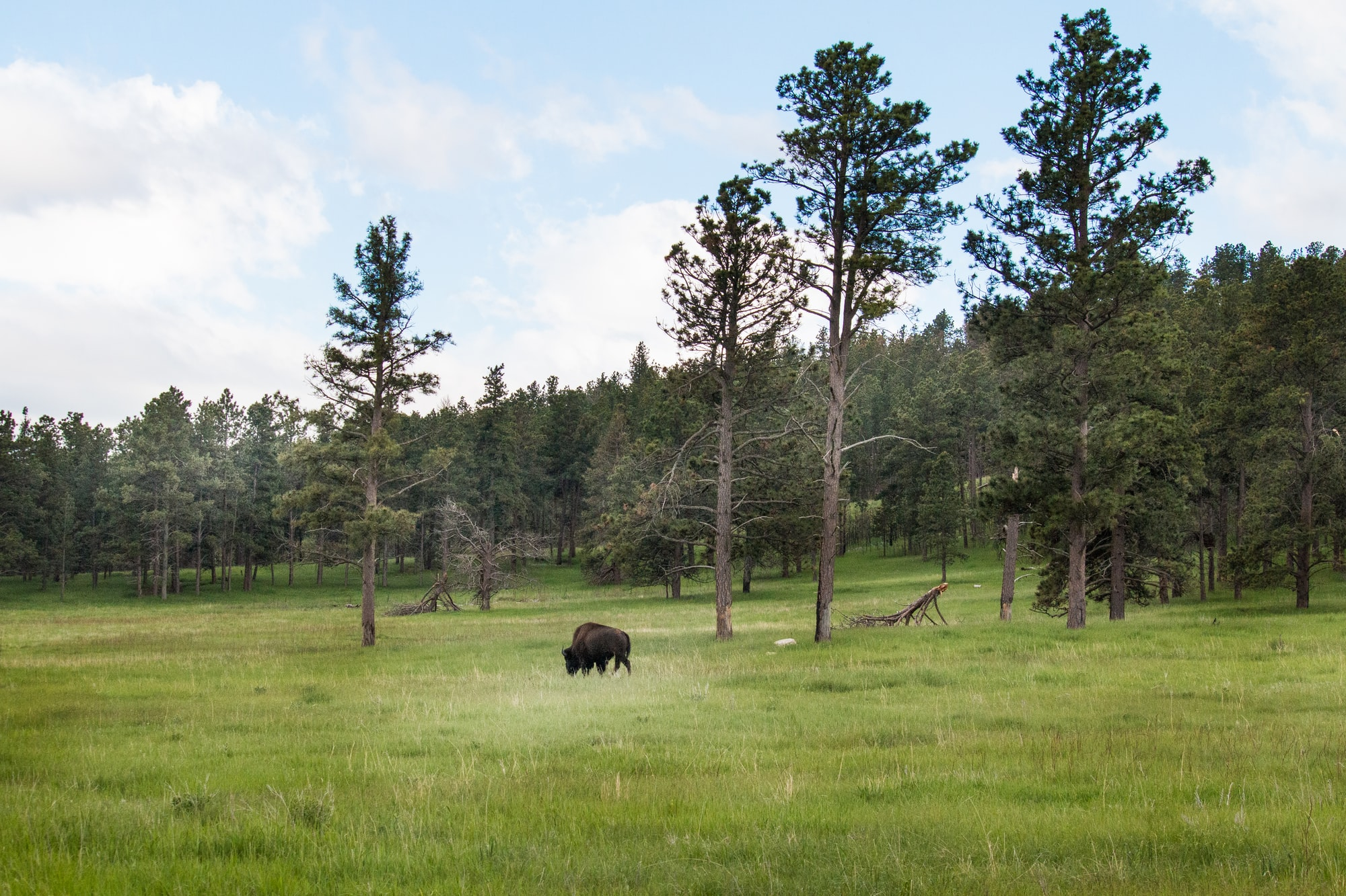 After record year, state park momentum shows no signs of stopping