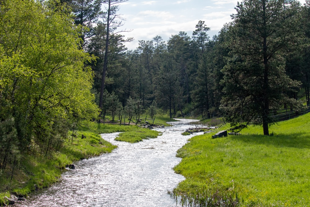 river between green tress during daytime