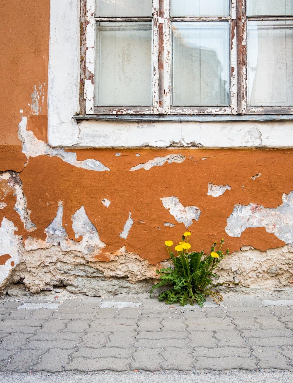 yellow flowers beside wall