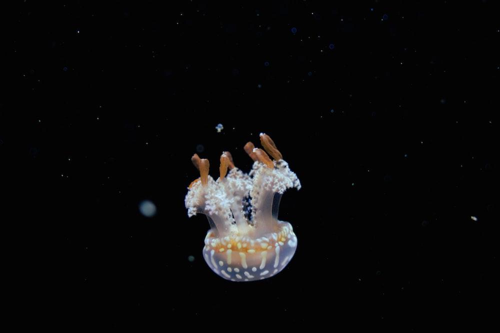 white and brown jellyfish
