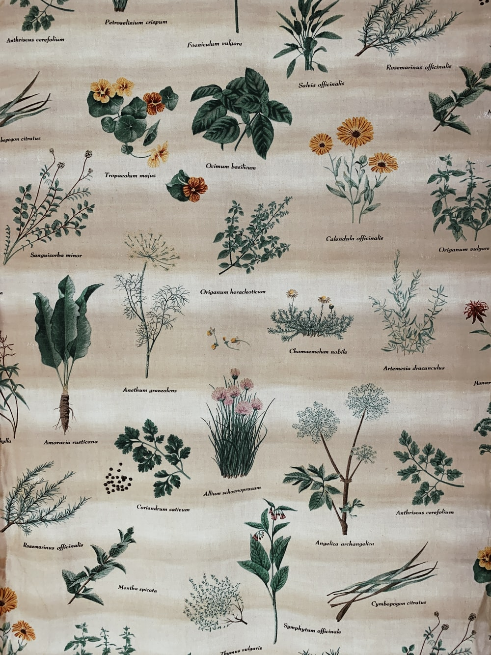 brown and green plant and flower printed textile
