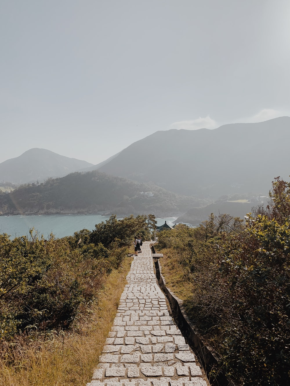 few people walking on pathway surrounded with tall green plants viewing sea and mountain