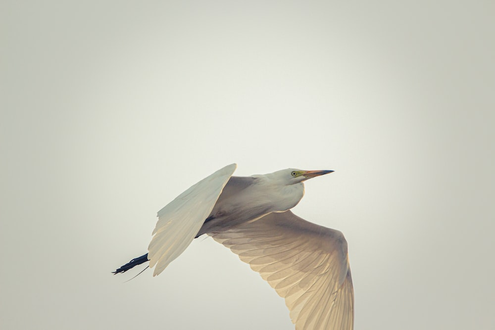 white and brown flying bird