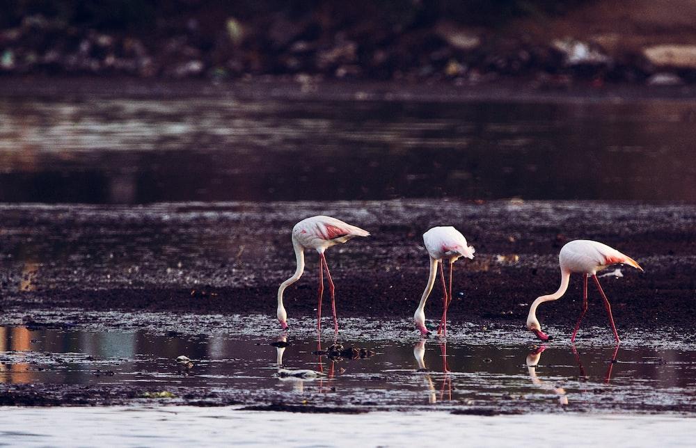 long-legged birds standing on body of water \