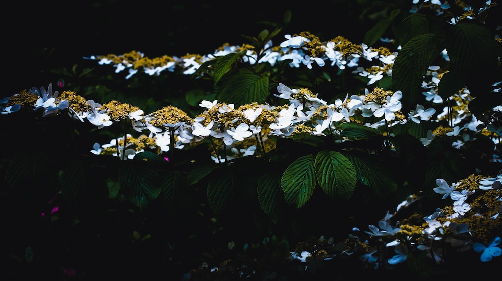white and yellow flowered plant