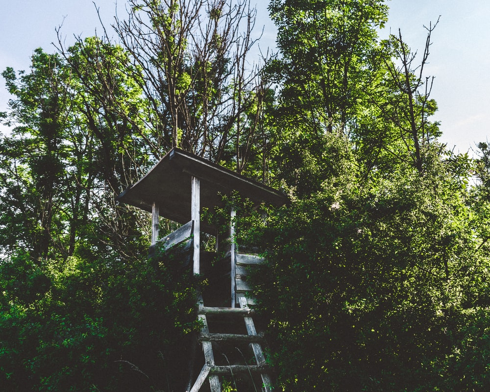 selective focus photography of tree house