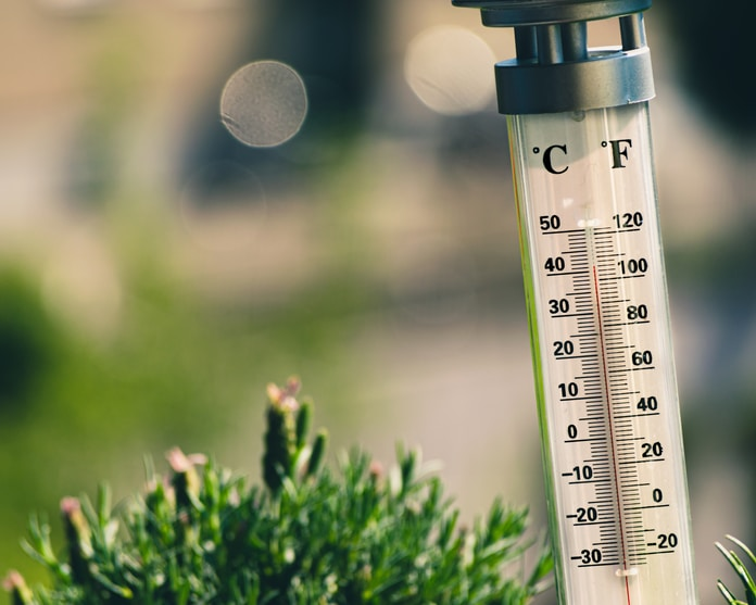 bokeh photography of thermometer on plant
