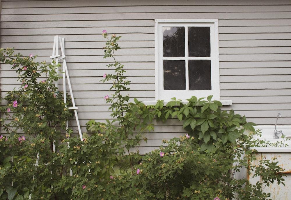 plants outside house near window