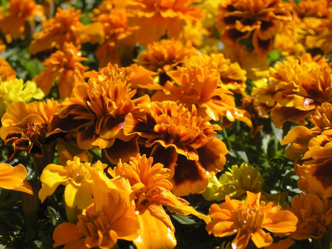fleurs Waterville
