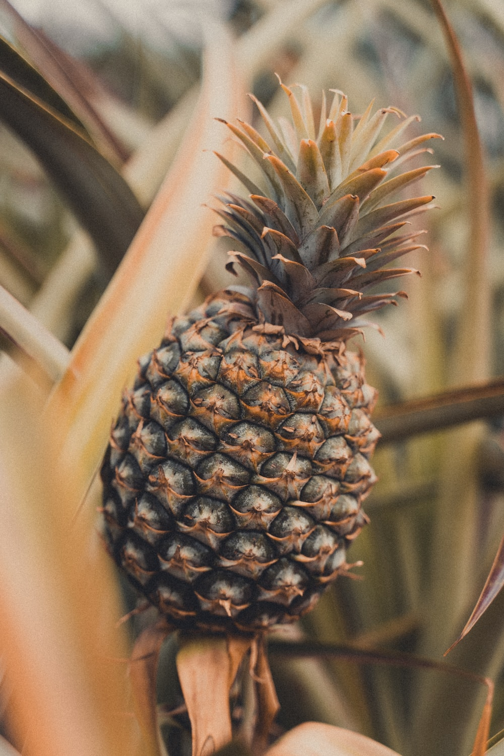 brown and green pineapple fruit