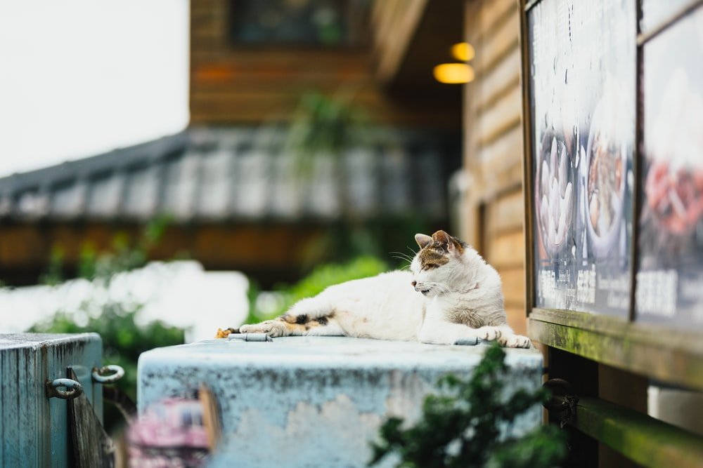 white and brown cat lying on concrete box
