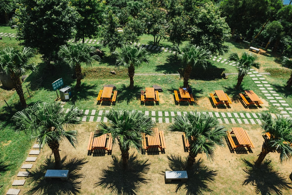 rows of picnic tables beside palm trees at the garden